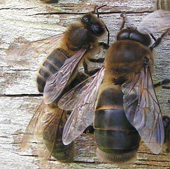 abeilles2.jpg